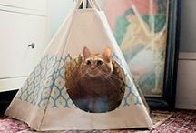 Cats / Cats - sometimes in craft, sometimes crafted, always cute.