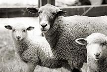 #woolweek