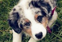 Pups! / by Kristen Burnett