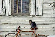 Rustic Windows & Doors
