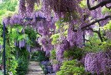 Gardeners' Delight / by Elizabeth Grantham