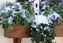 Michigan Window Boxes in Winter / by SofterSilk