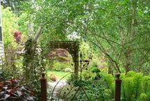 Dream Gardens / by Caryn Smith