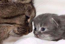 Mother's Love (Animals)