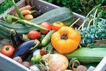 Zahrada-zeleninová