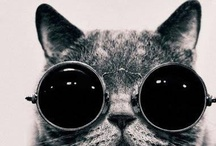 Totally Cool Cat Sh!t / Cat beds, cat toys, cat trees, cat pictures, cat jokes, cat videos, cat stairs, cat care, etc.   / by PJ Shores