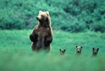 Wildlife! / by Raquel Mathis