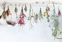 dried foliage and flowers