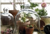 Cloche, Bell Jars / by Tricia Roux