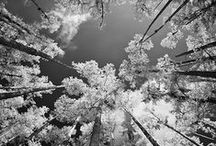 Black and White Photography / A collection of awe inspiring, beautiful black and white photographs.
