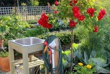 The Nitty Gritty Potager Blog / Growing a kitchen garden aka potager.