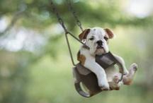 Pets / by Amy Edmison