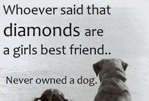 Cute dogs!