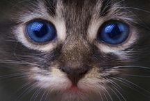 cats / by Helen Langhorne