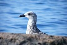 Möwen - Seagulls