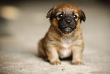 Cuter than Cute / by Michele Woodard