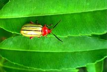 Bugs! / Sometimes colorful and sometimes not, bugs from the tropics  / by Lucy Haines
