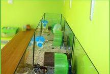 De Green Room / De Green Room is onze Hamsterkamer waar alle hamstertjes wonen. We houden Russische Dwerghamsters en ze hebben een eigen kamer tot hun beschikking die helemaal groen van kleur is. #hamster #dwerghamster #russischedwerghamster