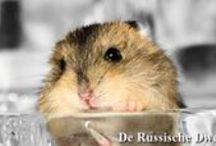 Black & White Hamsters / De black & white fotoshoot met de hamstertjes. #hamster #dwerghamster #russischedwerghamster