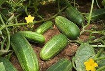 Vegetable, Fruit & Herb Garden