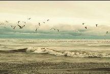 Ocean ♥