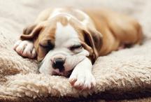 so cute! / by InvitationBox