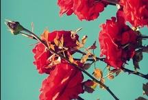 BOTAPHILIA / Terrarium // Plants // Flowers // Buds // Blooms // Weeds