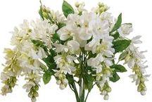 Pioneer's Best Wedding Silks / The best artificial flowers for wedding silk designs.