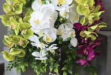 Top Quality Orchids