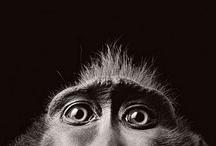 Apes & Monkeys / by Helena Scheibe