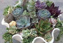 Gardening / by Suzette Montera-Smith