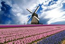 Hup Holland Hup!! / by Maryke VanBeuzekom