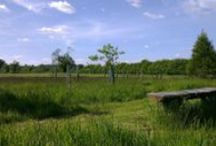 Henley Natural Burial Woodland / Situated in the Chilterns Area of Outstanding Natural Beauty, the natural burial ground at Rotherfield Greys forms part of a scheme of new native woodland planting on Grey's Green Farm.