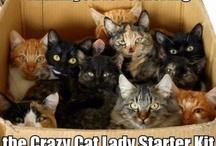 I AM A OFFICIAL CRAZY CAT LADY / by Gloria Chunn