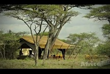 Window on the Safari Experience... / Take a peak at incredible African wildlife! http://africatriedandtested.com/