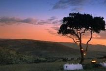 Tanzania By Night / Night drives are simply divine and a must for your safari experience! http://africatriedandtested.com/before-you-go/travel-tanzania/