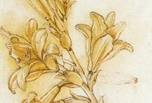 """Historic Botanicals & Beastes / Needleworkers hundreds of years ago used prints and books by artists as inspiration for their samplers, often transferring these drawings through """"pouncing"""" onto the ground fabric."""
