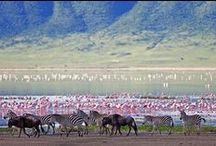Ngorongoro Crater / A safari is not complete without a visit to the Ngorongoro Crater. If you're travelling in a 4×4 to the Serengeti, you drive along the rim of the Crater anyway so it would be silly no to spend at least a morning or afternoon game driving on the crater floor. http://africatriedandtested.com/destinations/ngorongoro-crater/