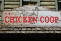 chickens & coops / by Lori Cibart
