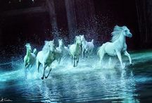 Horses / beautiful images of horses, mostly white ones.