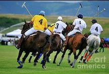 POLO ! / by Doug Addington