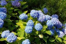 Garden and Yard ideas / Gardening flowers, yard ideas