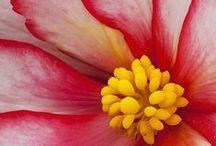-passion for petals- / by Brigette Rau-Edgell