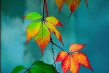 -abundant autumn- / by Brigette Rau-Edgell