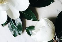Flowers / by Natalka Pavlysh