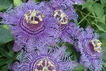 Bedding Plants / Plants that I love / by Pam Kromenacker