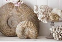 Beachcomb Finds / Stuff Collected Walking the Beach / by Pam Kromenacker