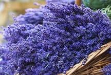 ...lavender fields