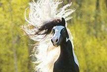 photografie cheveaux/paarden fotografie/horses photografie