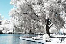 Winter / by Natalka Pavlysh